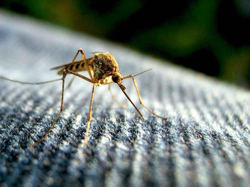 natuurlijke-middelen-tegen-muggenbeten.jpg
