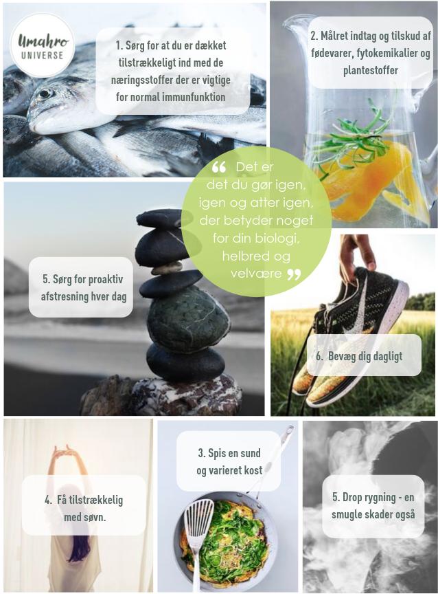 How to guide • Styrk dit immunforsvar.png