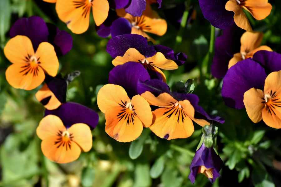flowers-900x600.jpg