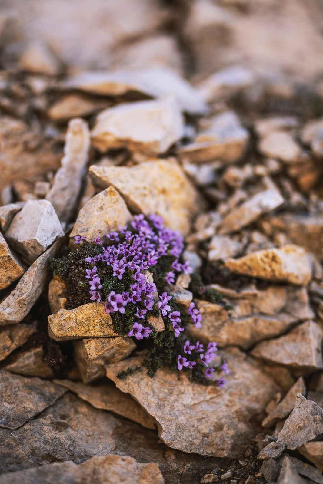 blomster op fra sten
