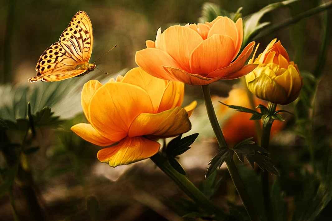 orange sommefugl og blomst.jpeg