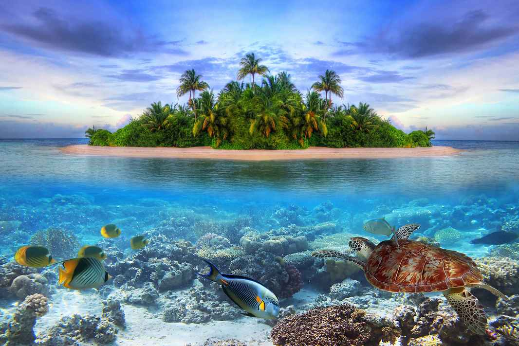 AdobeStock_40914644 beach island retreat turtle .jpeg