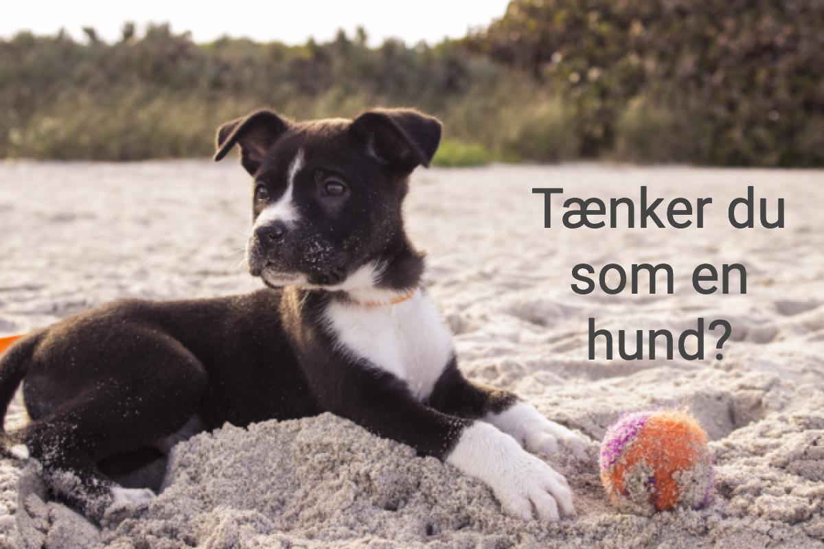 6 tænker som hund.png