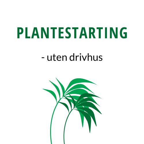 Plantestarting Uten Drivhus