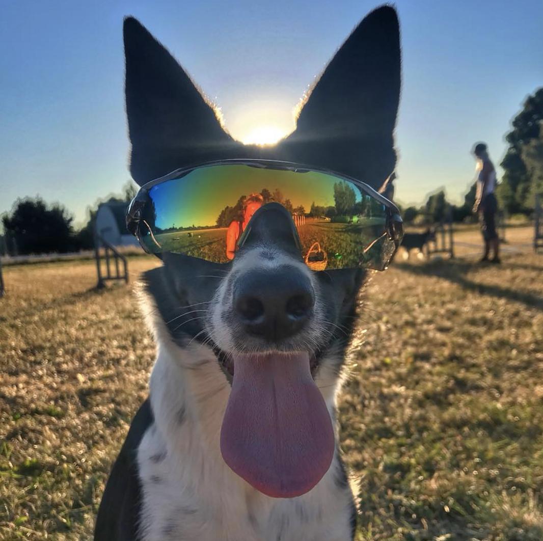 Noell solbriller