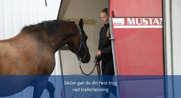 Sådan gør du din hest tryg ved trailerlæsning.png