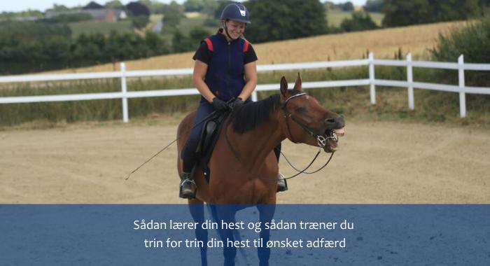 Sådan lærer din hest.png