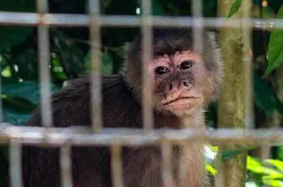 Amazonico monkey-001X400