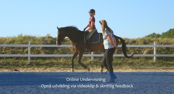 Online 1:1 Undervisning