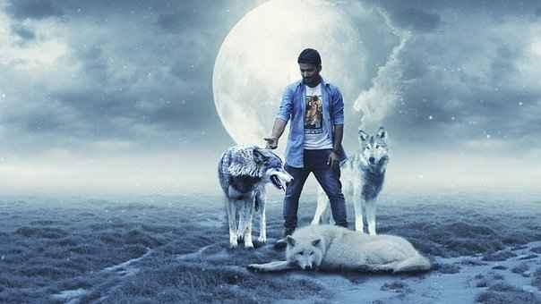 wolf-2400065__340