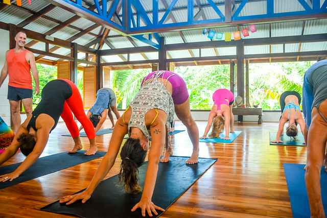 Yoga Alignment Downward Dog || Yoga Alignment course with Blue Osa Yoga Retreat