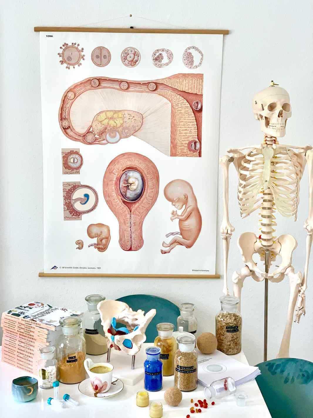 HTU Introduktion til hormonterapi anatomi urter