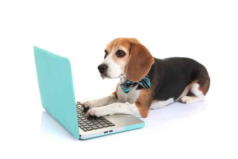 Computer dog4.jpg