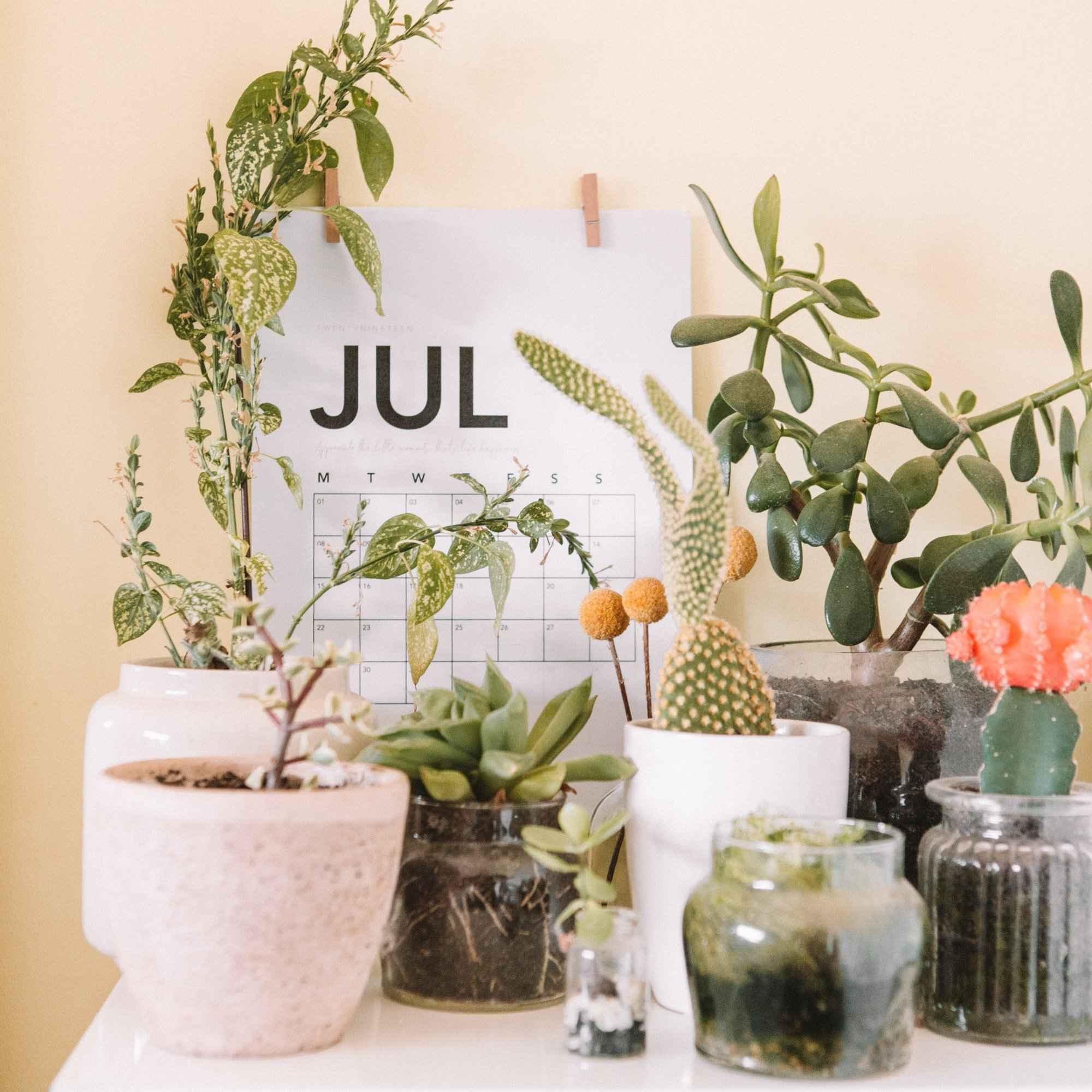 July-Cacti-edited.jpg