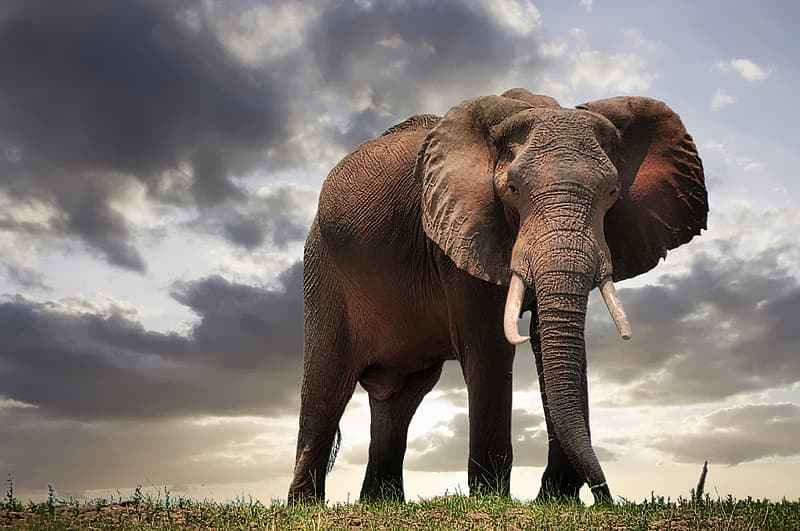 brown-elephant-under-cloudy-sky-during-daytime.jpg