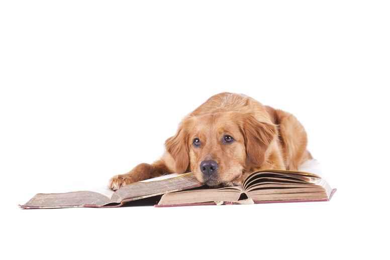 Depositum til Hundeadfærds- og klikkerinstruktøruddannelsen - opstart september 2021