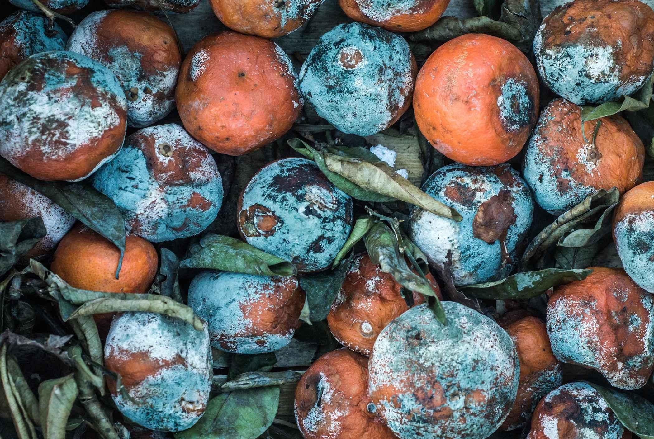 rotting-fruit-texture-background-PJK7TZ9