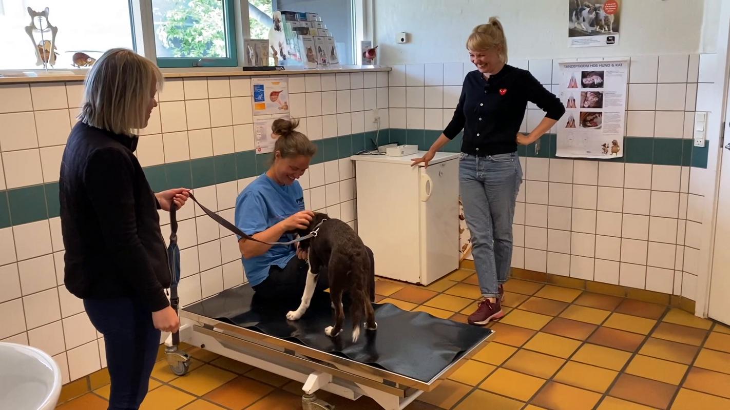Forebyg dyrlæge - Stina snakker
