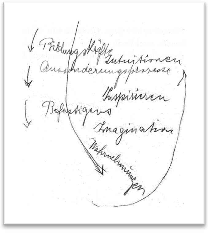 Steiner Heileurthmie Grafik - EN 678w-800h cropped