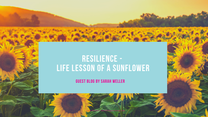 resilience blog cover