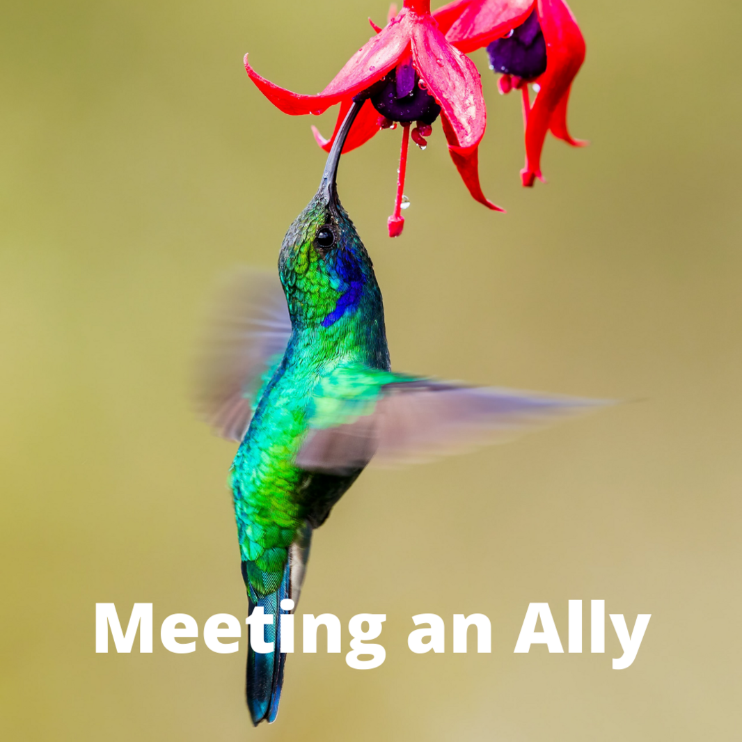 Meeting an Ally.png