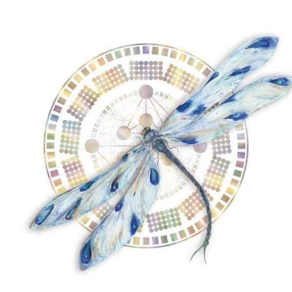 Gene keys DragonflyWheelSquare no perm