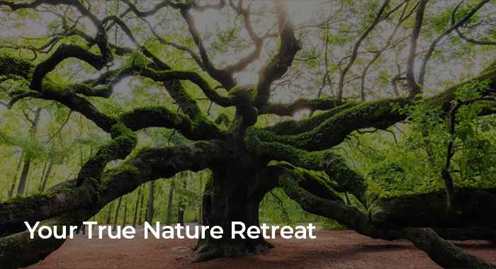 Your True Nature Retreat - Byron Bay