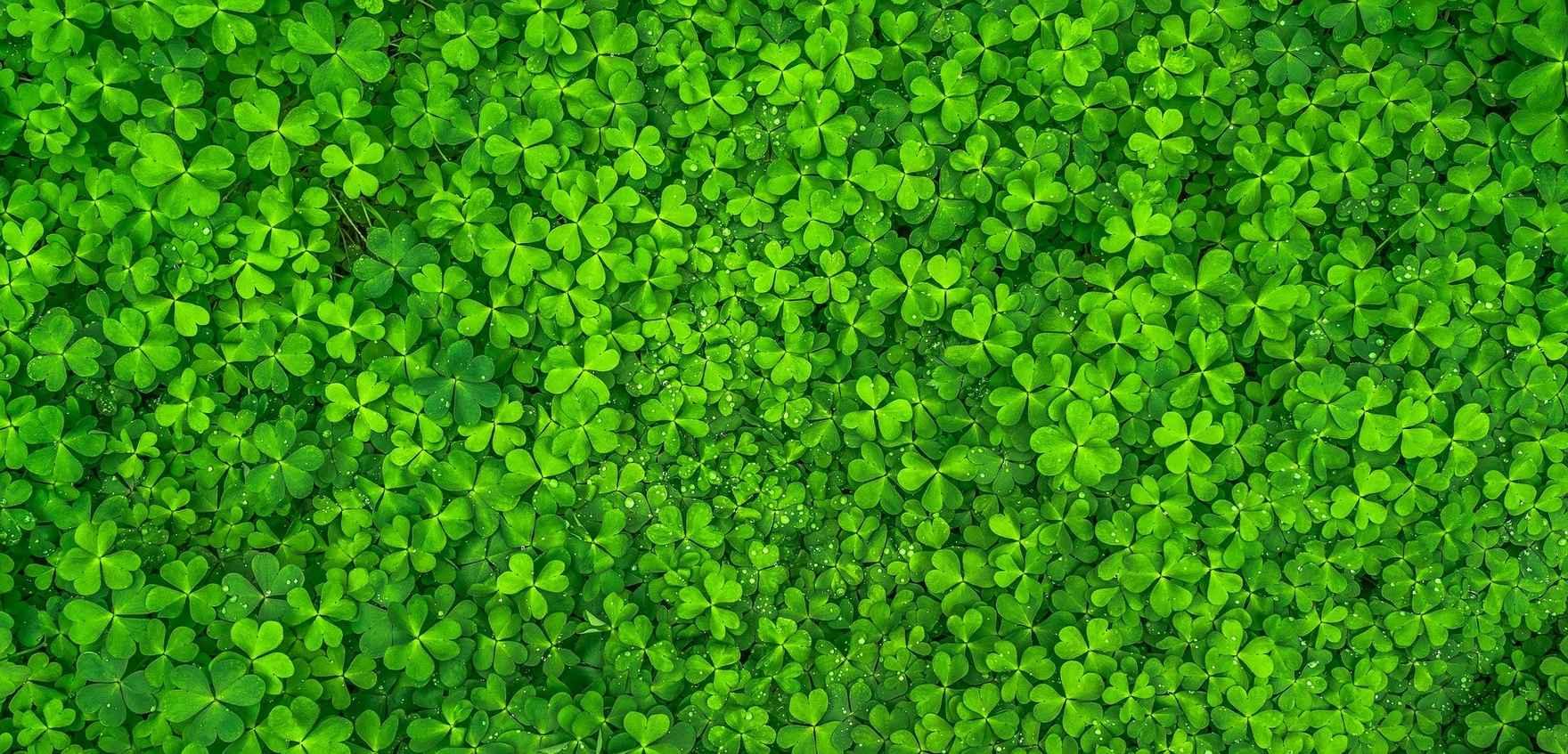 leaf-1482948_1920.jpg