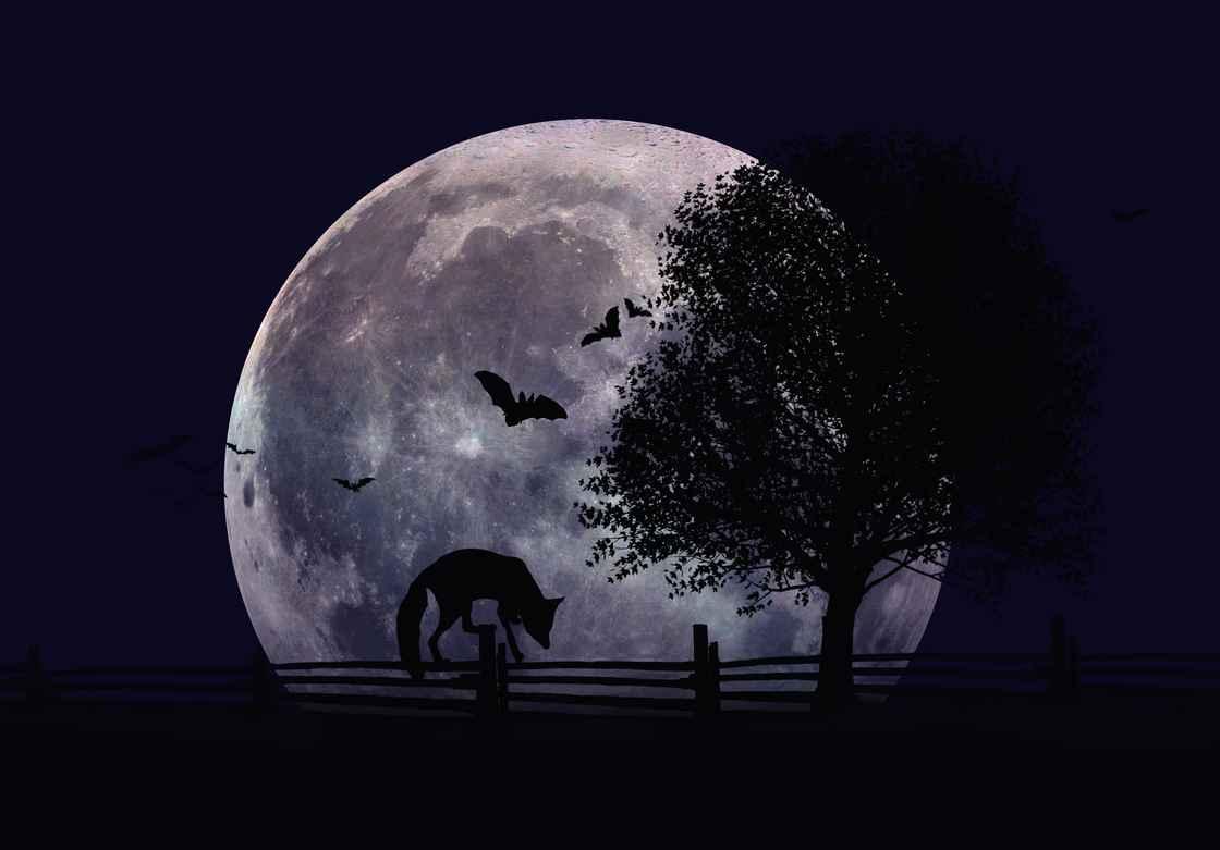dreamstime_l_152951467.jpg