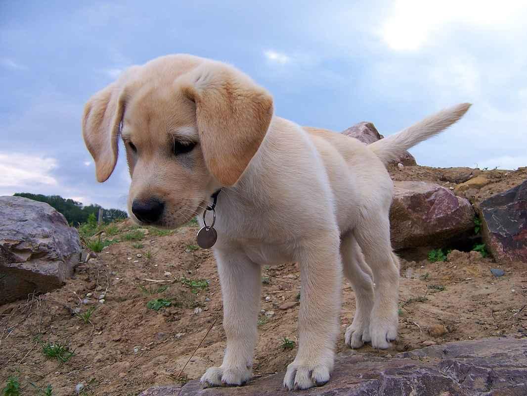 dog-954520