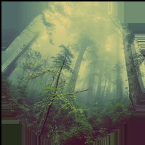 Urskov_tåge_cirkel__lille_png