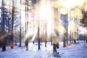 solstice-prep-list