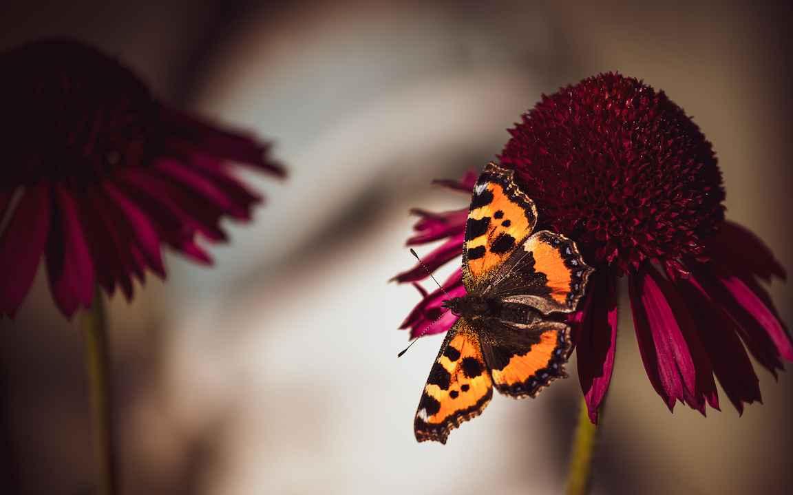 Splashscreen sommerfugl
