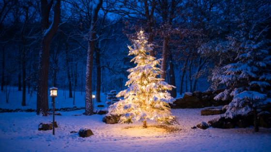 Blogg; en ensom jul