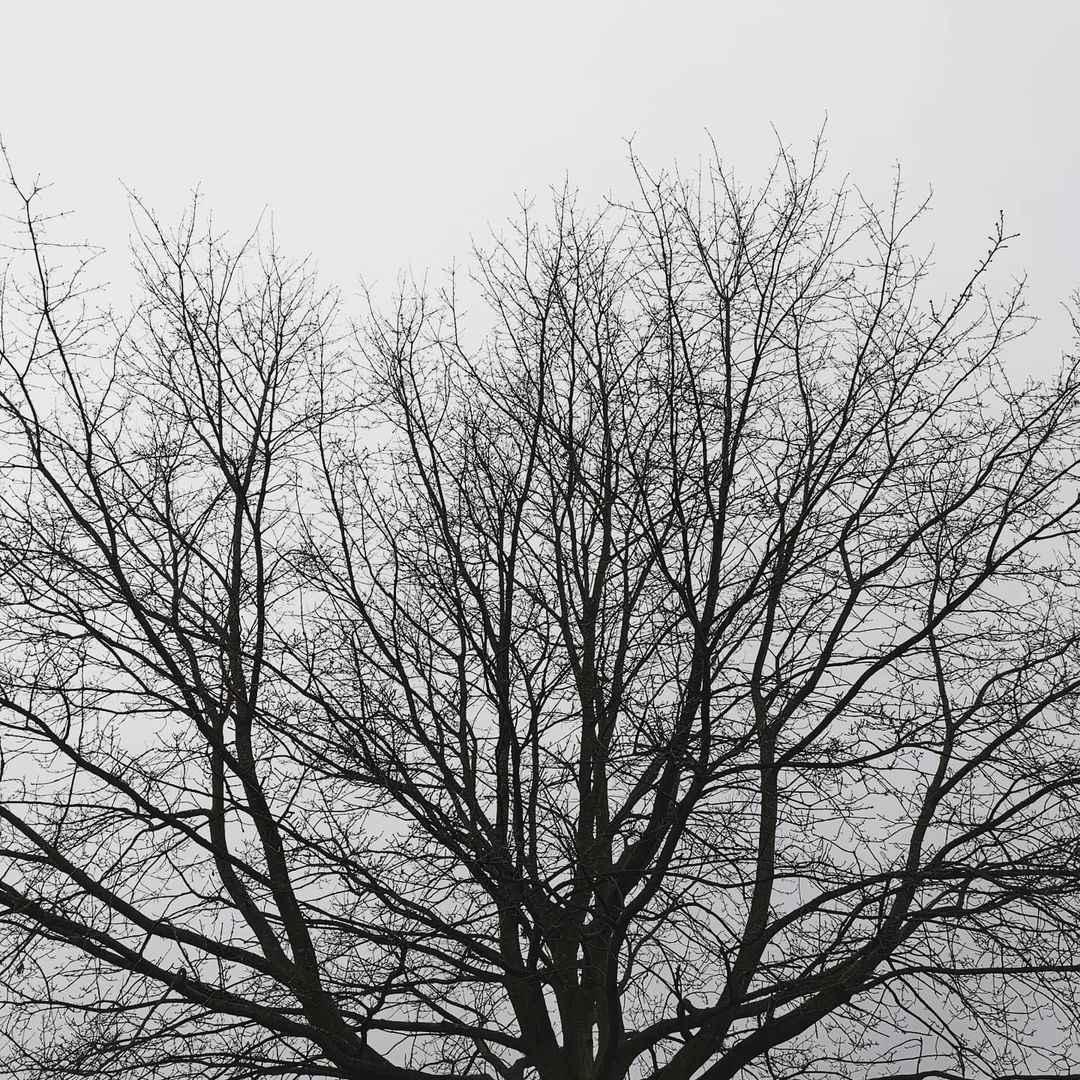 kammuka2010-instagram-black-tree-healing-loneliness