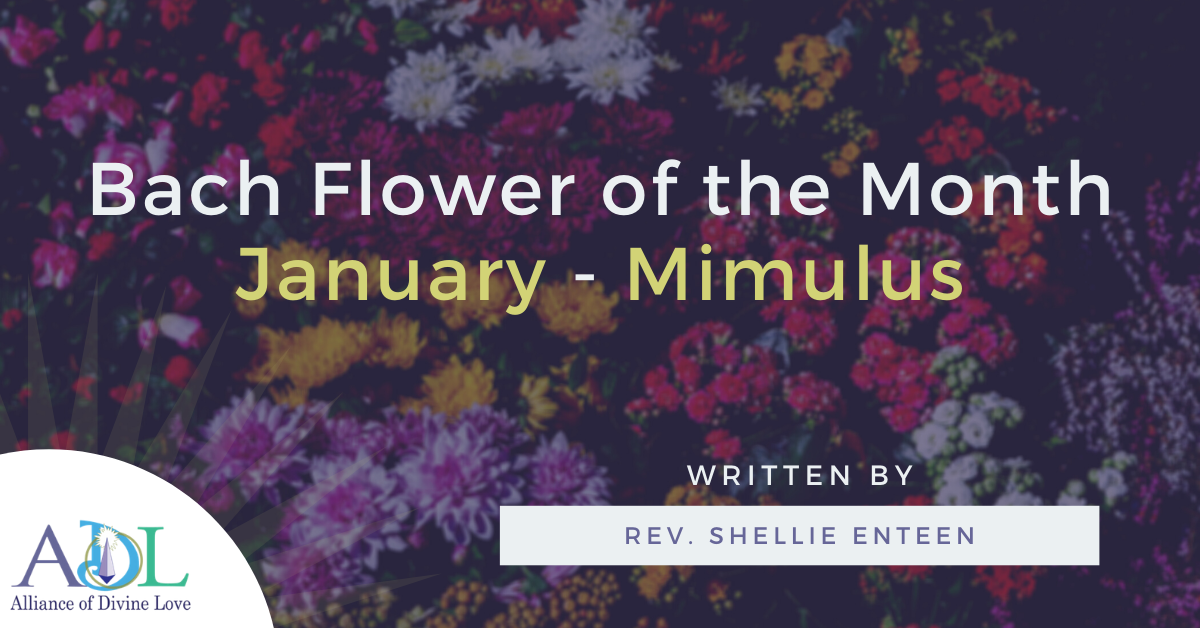 ADL Blog-Bach Flower of the Month_Mimulus-2021_01