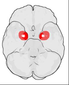 BL00 Brain 1