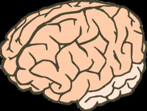 BL00 Brain 3