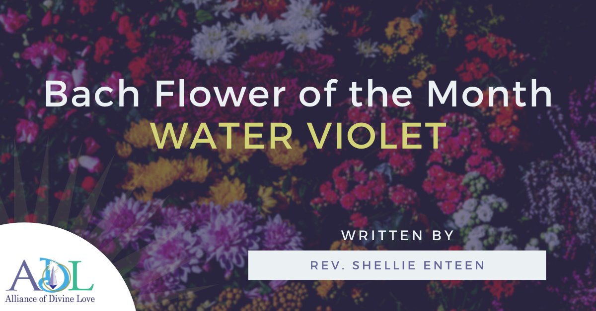 ADL Blog-Bach Flower of the Month_Water Violet-2021_02