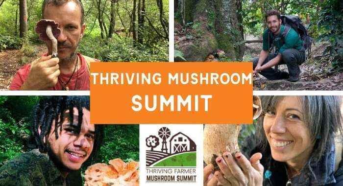 Thriving Mushroom Summit!