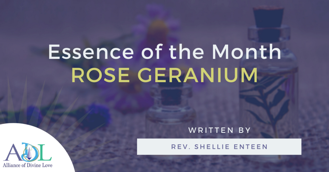 ADL Blog_Essence of the Month_2021_04_Header Image_Rose Geranium