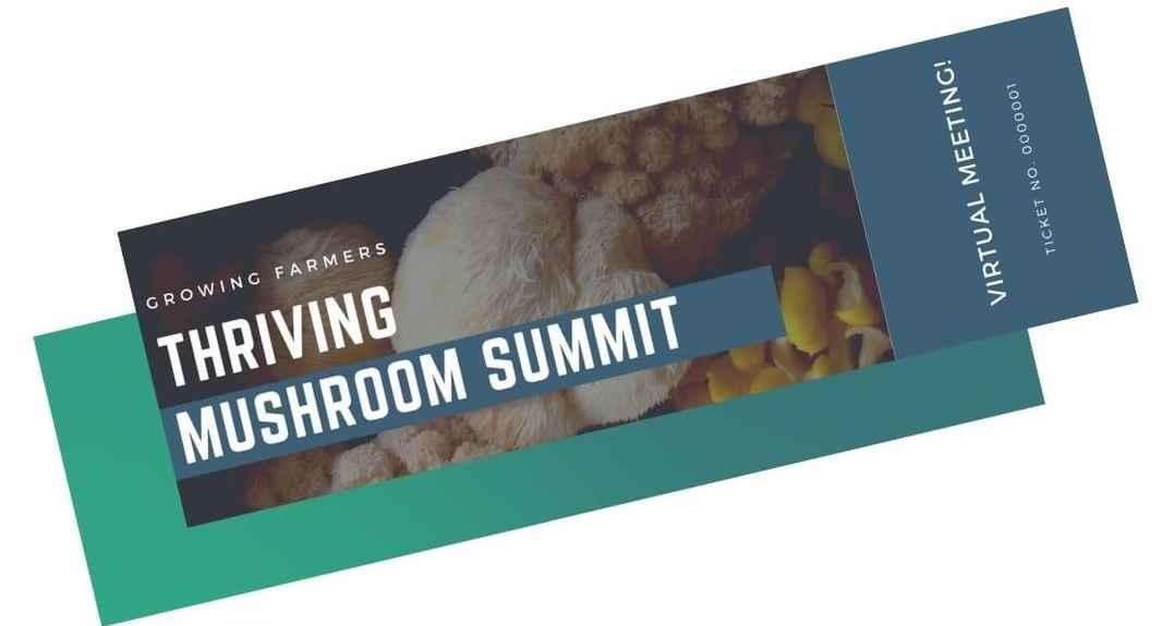 S02- Mushroom Summit- Ticket