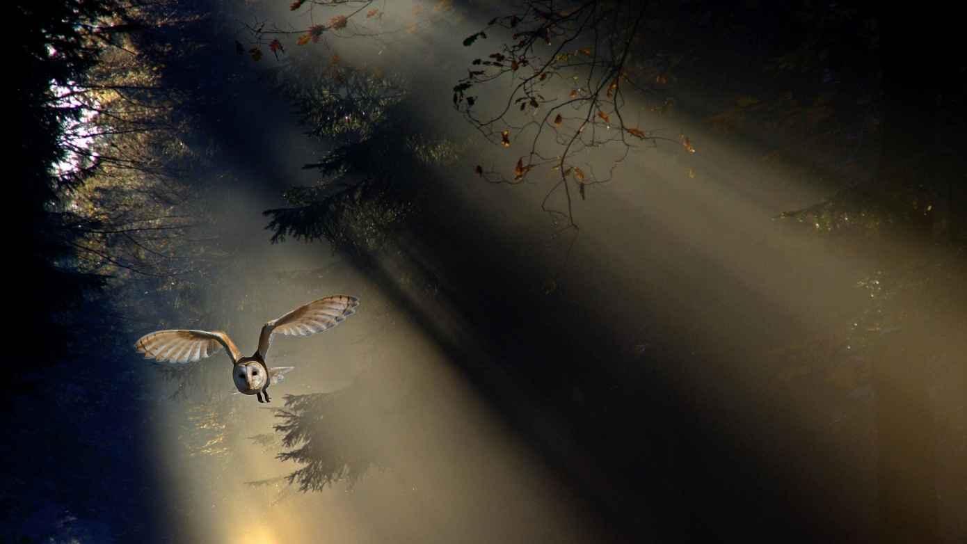 owl landing forest header