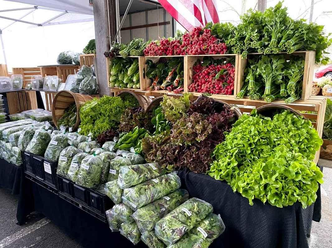 Farmers Market- Display- Lettuce- Radish- Greens- Harvest- Product (1)