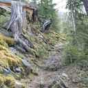 Weg Wald Simplero