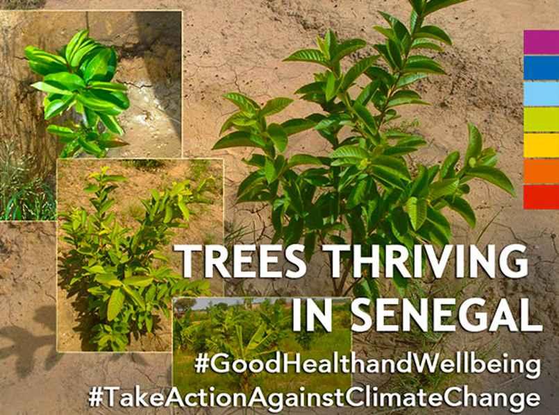 senegal-trees