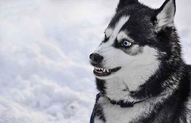 dog-2414477_1280