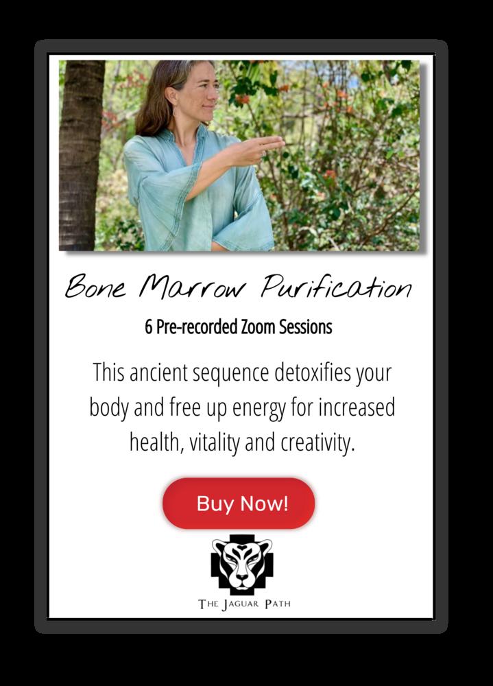 Bone Marrow Purification Form