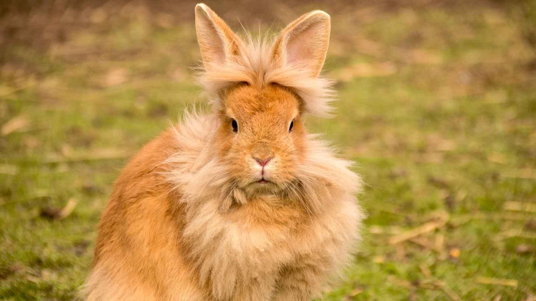 hare-2218452_1920-edited