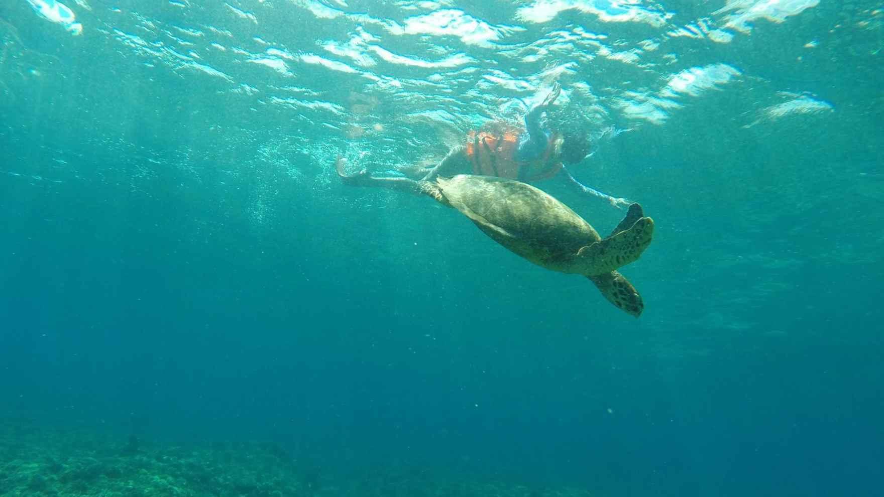turtle-swim-Bali-Indonesia